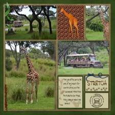giraffes_SS_189.jpg