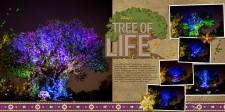 TreeofLifeWeb1.jpg