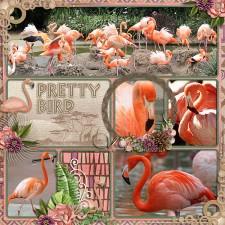 Flamingosweb.jpg