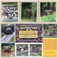 safari81.jpg