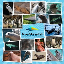 SeaWorld_Animals_Left.jpg