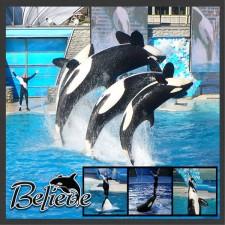 SeaWorld_Shamu_Show_Left.jpg